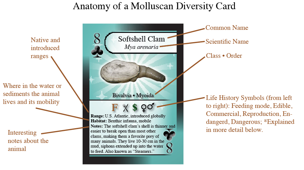 Anatomy of a Mollusc Card