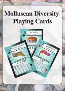 Molluscan Diversity Playing Cards
