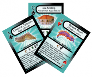 Mollusc Playing cards